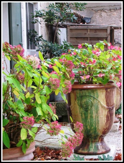 Lou Figoulon flowers