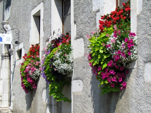 Annecy flowers