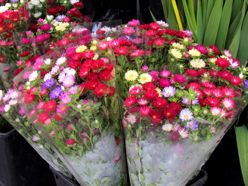 mornings at the nice flower market  belle provence travels, Beautiful flower