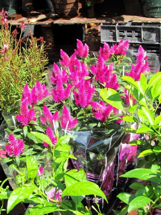 Nice flower market 3